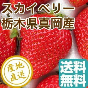 完熟スカイベリー 2パック入箱 1パック約310g×2 栃木県真岡産 いちご 送料無料