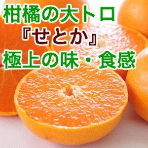 特秀 せとか 特大6玉入り化粧箱 宮崎県産 産地直送 送料無料 みかん 柑橘類