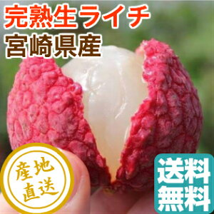 高級完熟 ライチ Lサイズ7〜8個入化粧箱 宮崎県産 送料無料 父の日 御中元 フルーツギフト