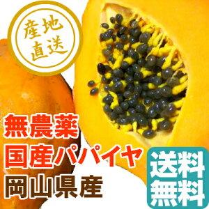 国産高級完熟 パパイヤ 無農薬 1kg箱 2〜3個入 岡山県産 送料無料