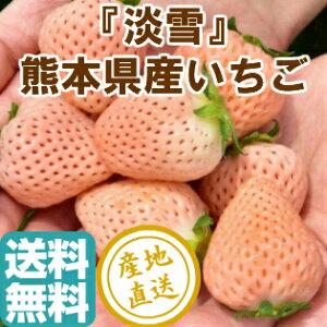 いちご 完熟 淡雪 白イチゴ 2パック入り箱 約500g 産地直送 送料無料 熊本県産