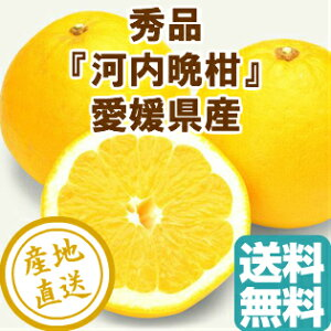 河内晩柑 8kg箱 愛媛県産 みかん 柑橘類 秀品 贈答用 産地直送 送料無料