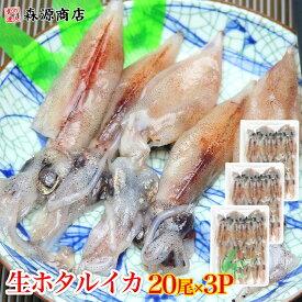生ホタルイカ 生食用20尾入り 3パックセット《※冷凍便》/ ほたるいか 蛍烏賊 珍味 刺身