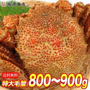 毛蟹 毛がに ケガニ 蟹 カニ かに ロシア産 毛ガニ 特大1尾約875g 送料無料 お取り寄せグルメ ギフト