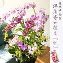 当店自慢!『洋ラン豪華寄植え「花爛慢」』花業界のプロが選ぶ、東京花市場「ベストアレンジ賞受賞」【楽ギフ_包装選…