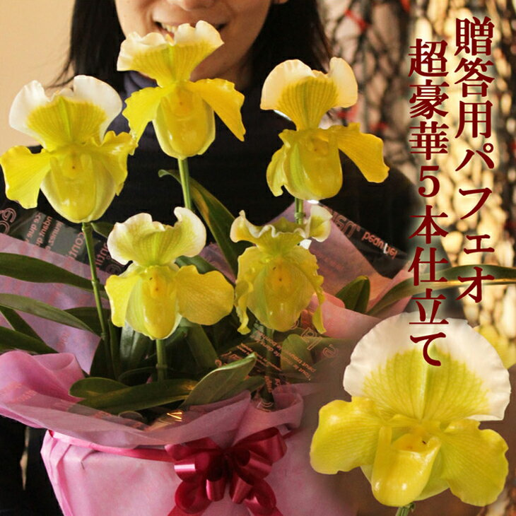 洋ラン『パフィオペディラム 豪華5本仕立て』陶器鉢花お花好きの方に贈りたい、オンリーワンのフラワーギフト!長く咲くのでギフトに最適なパフィオペディルム