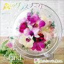 Island-new2