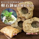 洋ランDIY 風情あるランの楽しみ方に!!『洋ラン軽石栽培 すぐ出来る植え替えセット』 軽石(中3個・または大2個) …