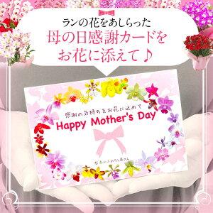 母の日ギフト2021☆選べる2種の『デンドロビューム母想い』【贈】花言葉「思いやり」2020年5月7日楽天総合デイリーランキング1位の母の日プレゼントデンドロビウム母の日鉢植え鉢花[母]