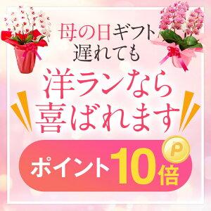 『思いやりいっぱいのお花を咲かせる洋ランギフト』楽天顧客満足度の最大化賞受賞