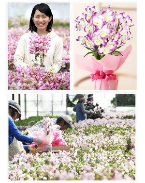 母の日花ギフト2021選べる2種の洋蘭『デンドロビューム母想い』花言葉「思いやり」母の日プレゼント母の日の洋ラン花ギフト