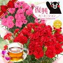 母の日ギフト 2019\熊本地震からの復興を目指す!/『国産!生花!復興カーネーション&フローラルハーブティセット…