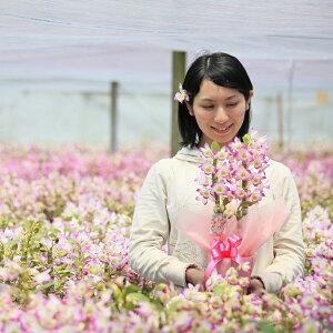 母の日花ギフト2021選べる2種の洋蘭『デンドロビューム母想い』花言葉「思いやり」母の日プレゼント【熊本城復興募金付】母の日の洋ラン花ギフト
