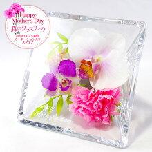 ボトルフラワースクエアお誕生日ギフトにプリザーブドフラワーを超える洋ランの永久生花!