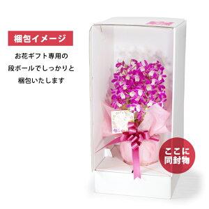 母の日プレゼント2021選べる2種の『デンドロビューム母想い』花言葉「思いやり」2012年5月5日楽天総合ランキング1位の母の日プレゼントデンドロビウム