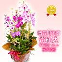 洋ラン寄せ植え『花いろいろ「天草」』陶器鉢花関東の花品評会「市民が選んだベスト賞」受賞!当園だけのアレンジメントあす楽 お祝い …