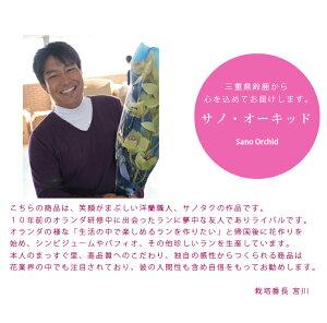 https://image.rakuten.co.jp/morimizuki/cabinet/sg/3bk_01.jpg