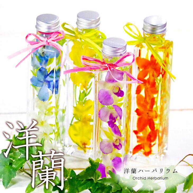 選べる4色!洋蘭ギフト 花 洋ラン農園手づくり『洋蘭ハーバリウム 』花色を損なわない独自のドライフラワー技術!ミニ胡蝶蘭、カトレア、デンファレ、デンドロビューム、オンシジュームを使用!お誕生日プレゼント