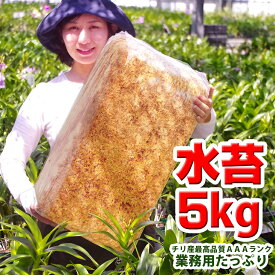 植え替えの必需品!業務用栽培資材『洋ラン 栽培プロ用 チリ産水苔5kg』 ミズコケ (sphagnum moss)トリプルA(AAA)ランク!長く高品質な厳選品です!水ごけ水ゴケ今人気の苔玉づくりや吊るし栽培にもお勧めします!生産者愛用のミズコケを洋蘭愛好家の皆様に♪