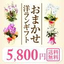 『洋蘭ギフト☆☆☆』 おまかせ5500 楽天年間ランキング連続受賞 フラワーギフトに迷ったらおまかせ洋ラン鉢植え 花ギ…