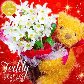 【冬限定】クリスマスプレゼントに!『洋蘭デンドロビウム エンジェルベイビー'グリーン愛' テディベア仕立て』鉢花可愛らしいテディーベアがお花を抱きしめています♪デンドロビュームをお歳暮やクリスマスに!誕生日フラワーギフトも◎