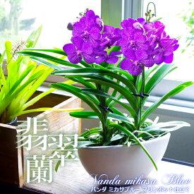 国内では非常に希少な洋ラン『翡翠蘭-バンダ 豪華2本マリンポット仕立て』空中に美しい根を出すバンダは、吊り下げ栽培にも最適!誕生日のお花やご自宅のリビングにも♪父の日ギフト