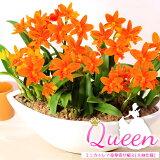 ランの女王カトレアかわいいピンク色は気分まで明るくしてくれます♪