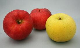 いよいよ収穫開始!!美味しい盛岡りんご!旬のりんご3個