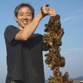 早期ご購入!まとめて2口分(むき身2口でも、殻付2口でも、むき身1口・殻付1口でもOK)(お届け先2件送料無料・お届け日別々もOK)「あなたの牡蠣を育てます!」自分の牡蠣が育つ楽しみ一口牡蠣筏オーナー権 2021