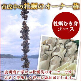 牡蠣のオーナー権販売「あなたの牡蠣を育てます!」自分の牡蠣が育つ楽しみ一口牡蠣筏オーナー権 2021(むき身コース)