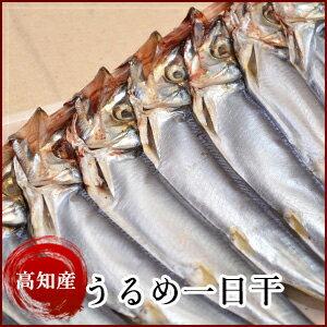 【漁師直送】高知県産 うるめ一日干(1串)天日干しのうるめいわし ウルメイワシ 岡岩商店