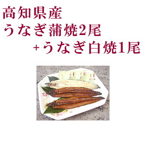 高知県産 うなぎ蒲焼2尾と白焼1尾セット/四万十/高知/冷凍/国産/無添加/ウナギ/鰻
