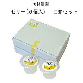 ゼリー6個入 2箱セット 岡林農園/高知/ギフト/プレゼント/母の日/お中元
