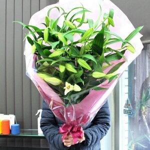 最高級大輪カサブランカ5本の花束。moriyaが自信を持ってお勧めする、白ユリの女王。本当のカサブランカです。大事な場面でお使いください。【フラワーギフト】