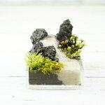 超ミニ 8cm 溶岩石 手のひらサイズ 苔テラリウム 完成品 現物 苔盆景 テラリウム 気孔石