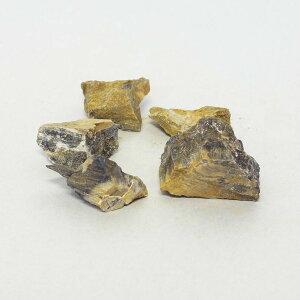 3-5cm 5個 木化石 飾り石 超ミニ ボトルテラリウム テラリウム形状お任せ レイアウト石 アクアリウム アクアテラリウム
