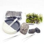 信楽焼の苔盆景 溶岩石 苔と器が選べる 作成キット12cm すぐに始められるピンセット付き!苔テラリウム