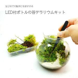 【スターターキット】LEDライト付ボトルテラリウム 作成キット 13cm 苔セット 苔 ギフト プレゼントにも 送料無料