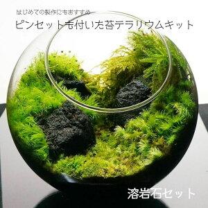 【スターターキット】ボトルテラリウム 作成キット 16cm 苔セット 苔 ギフト プレゼントにも 送料無料 溶岩石