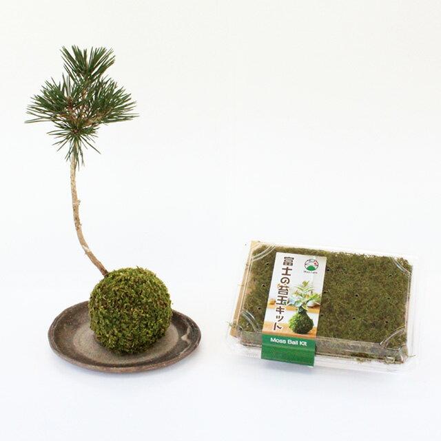 苔玉 苔玉キット 苔 こけ コケ 【富士の苔玉キット(ハイゴケ)】