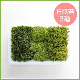 苔 こけ コケ【日陰苔3種ミニパック(M1)(222×143mm) 】