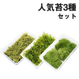 苔 スナゴケ ハイゴケ ホソバオキナゴケ【人気苔3種ミニパックセット(S1) 】