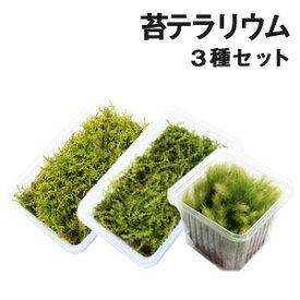 苔 こけ コケ 苔テラリウム【苔テラリウム3種ミニパックセット(S) 】