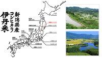 【お米】新潟県産コシヒカリ10kg【おこめ】【伊丹米】