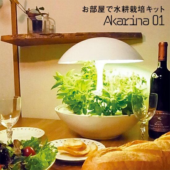 MotoM 灯菜 Akarina01 LED水耕栽培キット サラダ菜種子・液肥・培地スポンジの3点セット付属 OMA01 オリンピア照明