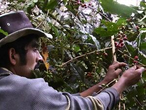 新豆★コロンビア ノルテ・デ・サンタンデル県トレード村・タママウンテン フレンチロースト 200g|COLOMBIA|colombia|深煎り|ストロング|【組み合わせ自由!コーヒー豆800g以上ご注文で