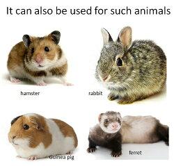 その他の動物