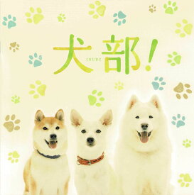 【映画パンフレット】 『犬部!』 出演:林遣都.中川大志.大原櫻子