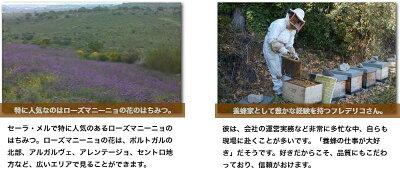 クマちゃんハチミツ(オレンジの花)340g【あす楽対応】