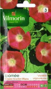 VILMORIN社-フランス花の種花・西洋アサガオ・スカーレットオハラ[V-Morning glory2]